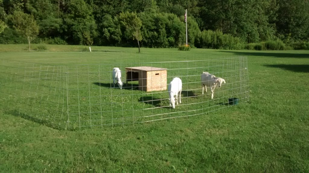 The mobile goat cage!